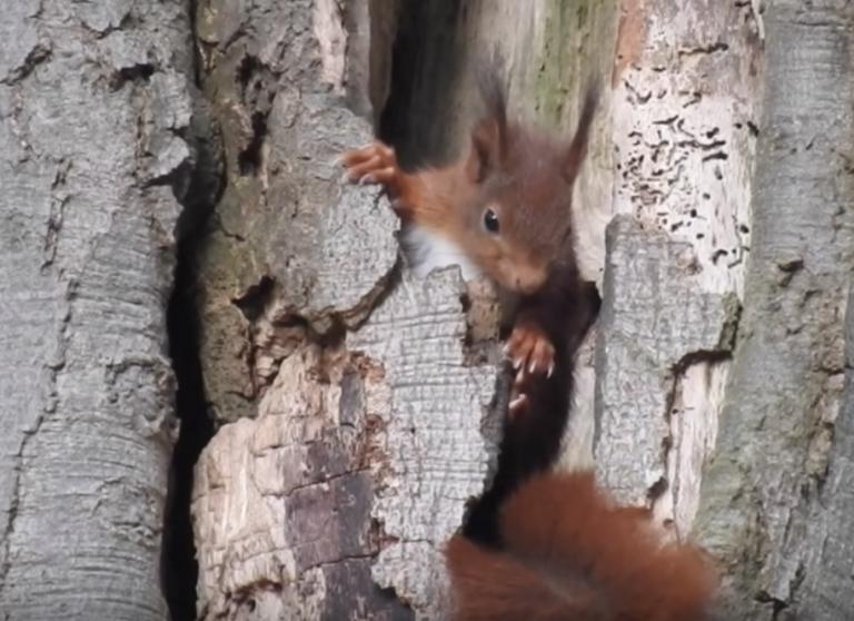 Kijken! Heerlijke beelden van jonge dieren in de lente.