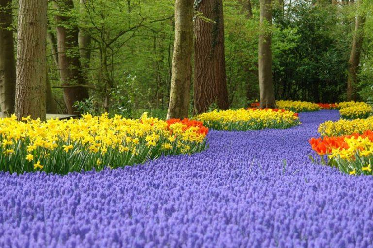 Zo geniet je optimaal van de kleurrijke bloemenvelden