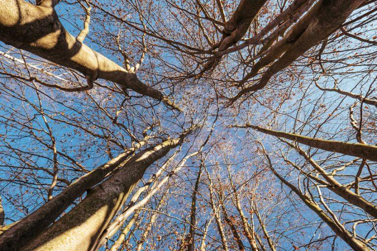 De mooiste boomkruinwandelingen