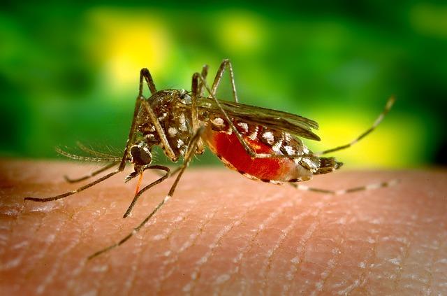Wat moet je doen tegen muggen?