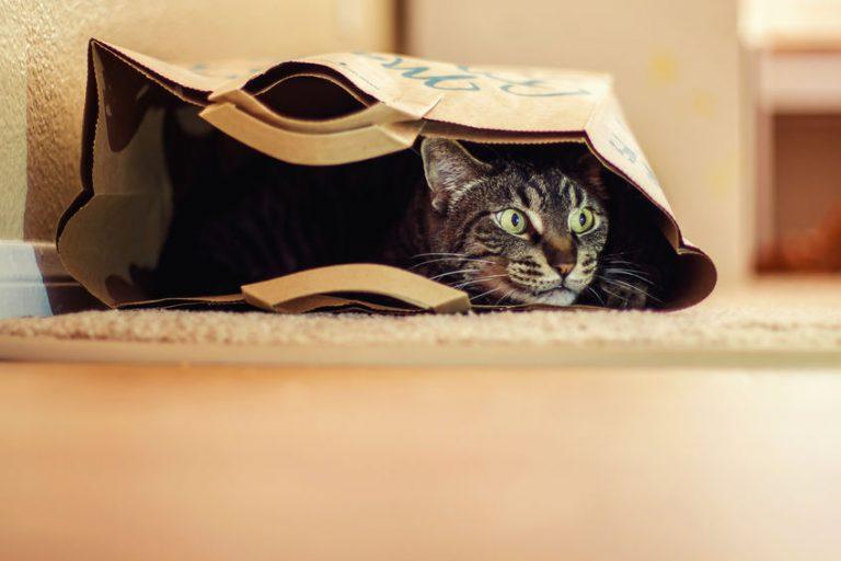 Kat in de zak gekocht?