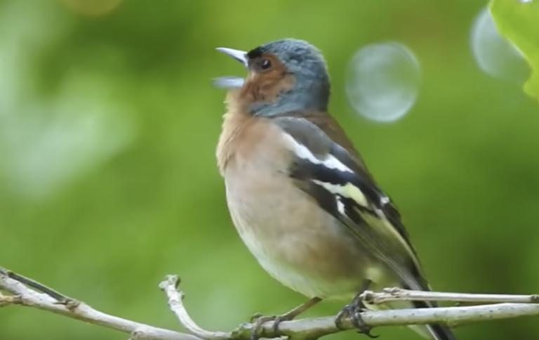 Handig! Korte (5 minuten!) cursus vogels herkennen