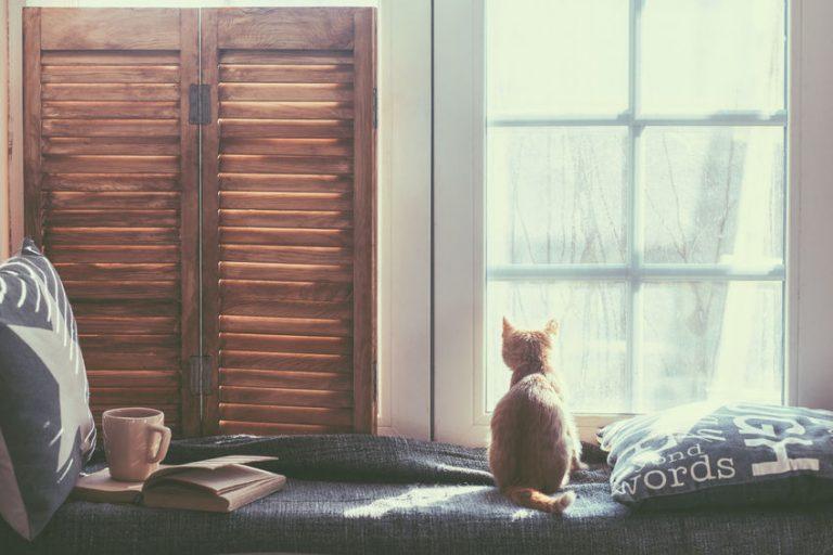 Je hoeft geen kattenliefhebber te zijn om geroerd te worden
