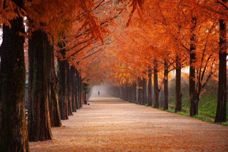 Instagrammers showen prachtige plaatjes van de herfst