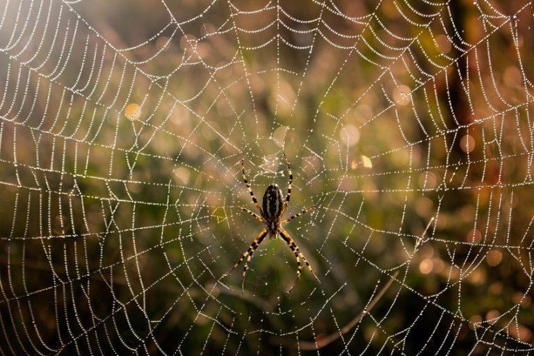 Help! Een spin