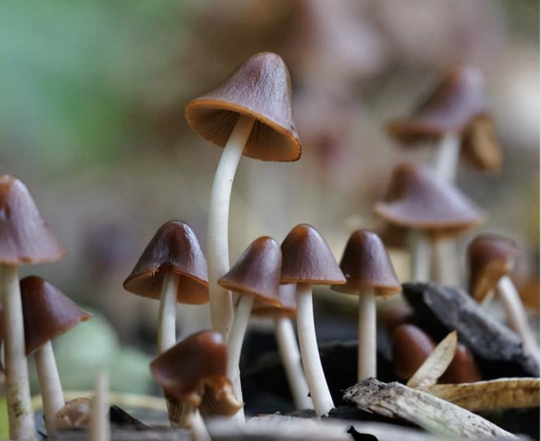 Rood met witte stippen en andere paddenstoelen die je kunt tegenkomen