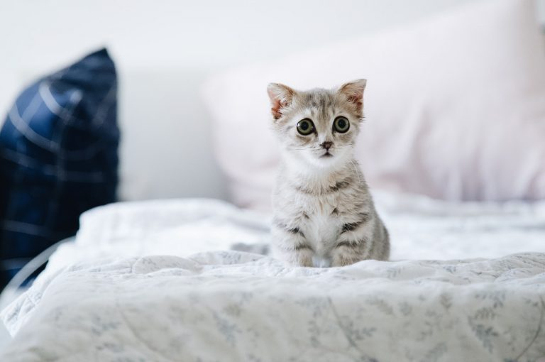 Omdat het Dierendag is: 10 superschattige foto's van kittens