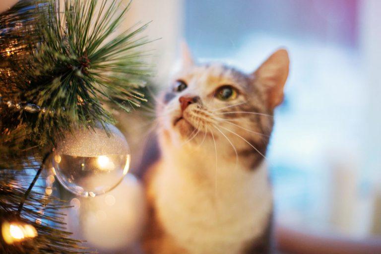 8 hilarische plaatjes van katten en kerstbomen