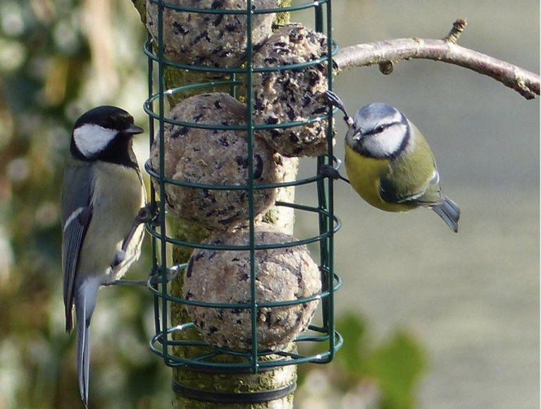 Zo komen er meer vogeltjes in je tuin