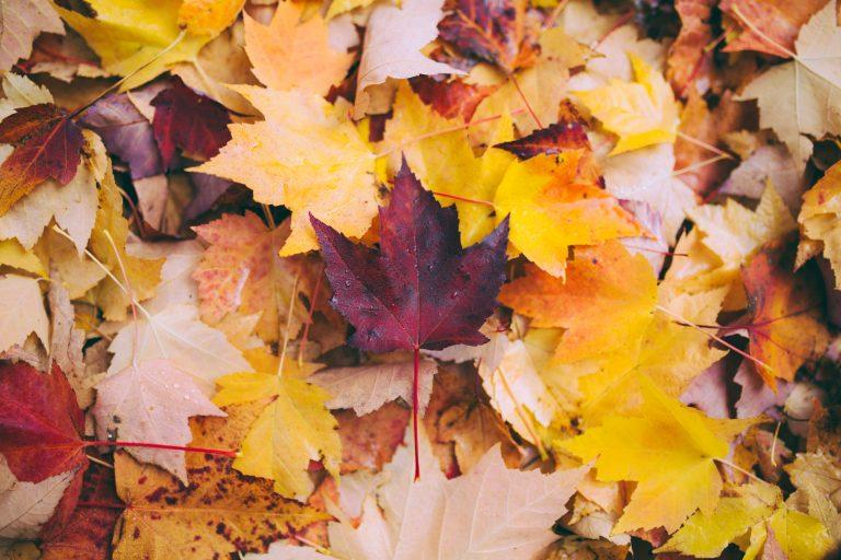 Bladeren, laat ze lekker liggen (vinden je planten fijn, en de vogels)