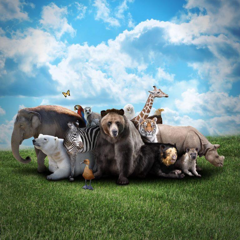 De mooiste dierenfoto's
