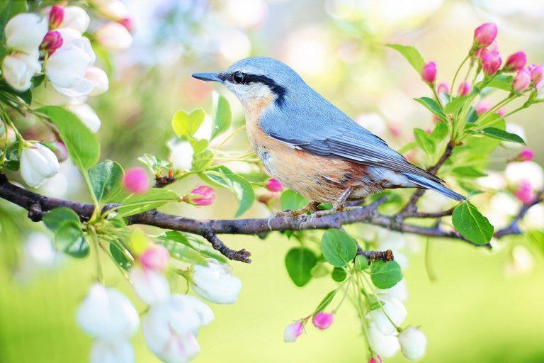 Tip: gratis online vogelcursus
