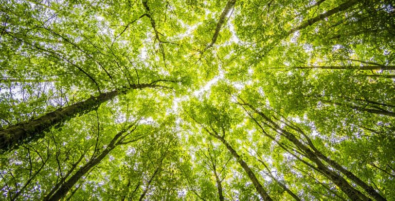 """'Buiten word je omhuld door de bomen en gekust door de lucht."""""""