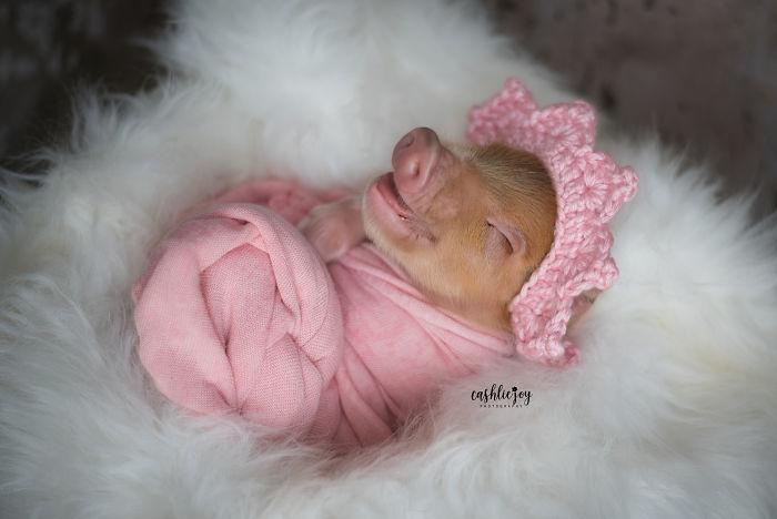 Een propje geluk: pasgeboren biggetje op de foto