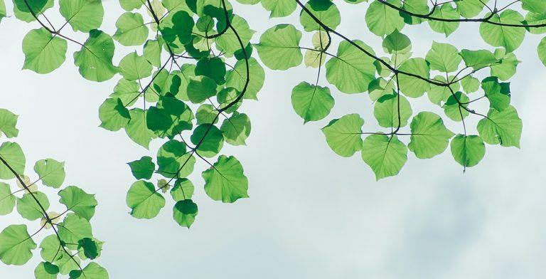 Kunst gemaakt van gevallen bladeren