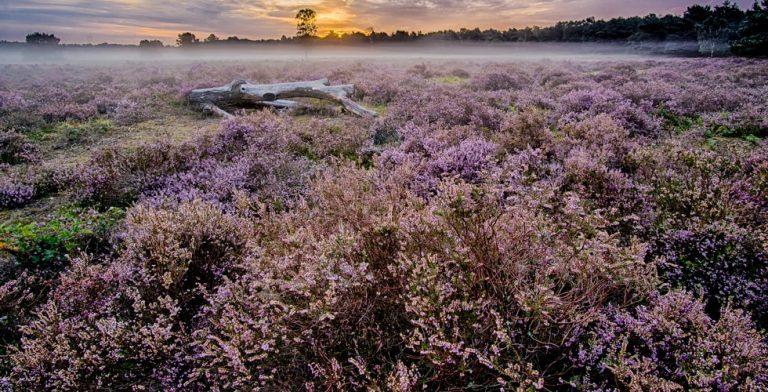 Ga mee oerwandelen in Drenthe