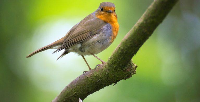 Het is weer tijd voor de Nationale Tuinvogeltelling!