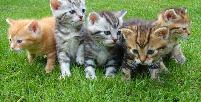 Wat als de wereld compleet uit katten zou bestaan?