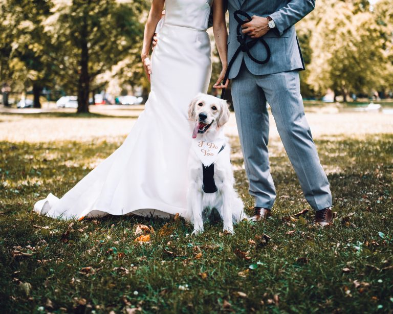 8 x honden die weddings crashen