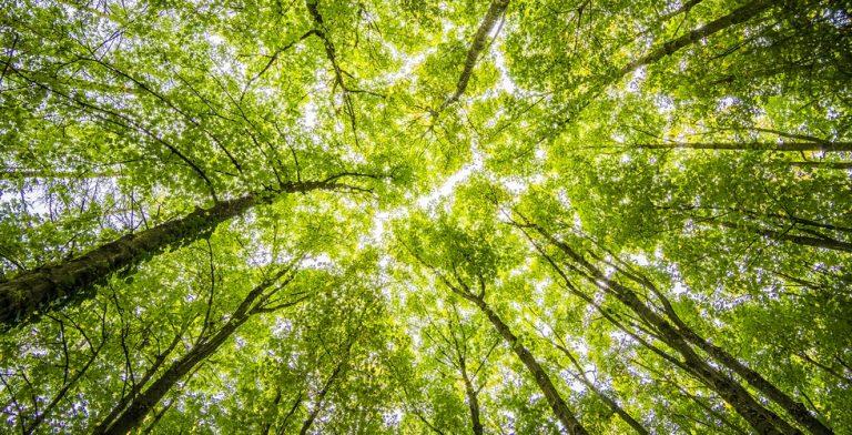 'Wetenschappelijk is vastgelegd dat bomen met elkaar communiceren'
