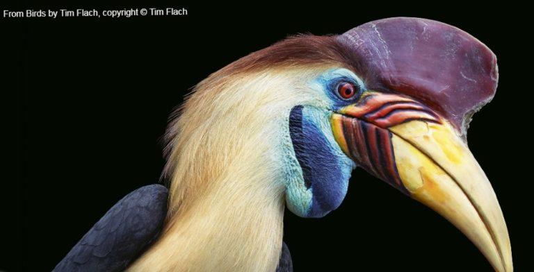 De verbazingwekkende schoonheid van vogels