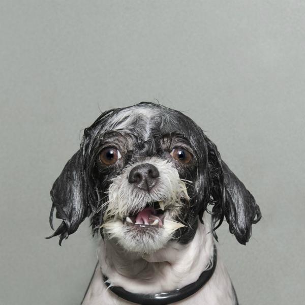 Wet dog 1-GOED