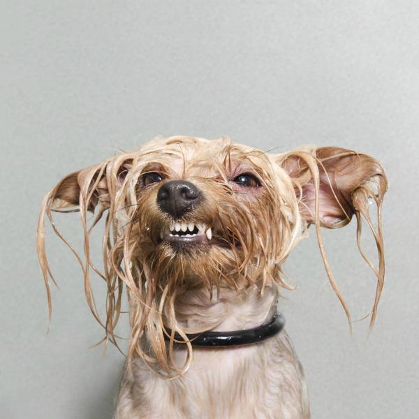 Wet dog 2-GOED