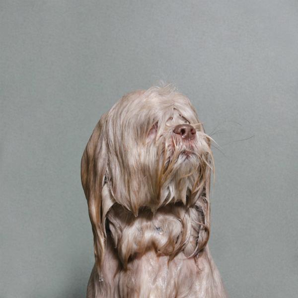 Wet dog 3-GOED
