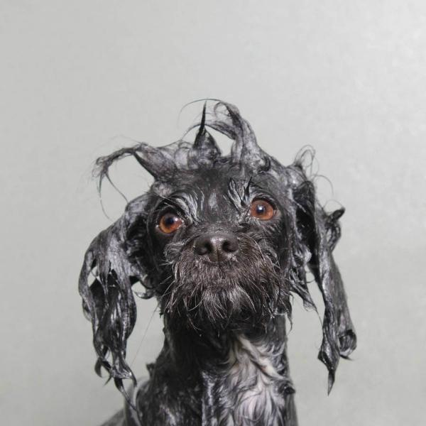 Wet dog 4-GOED