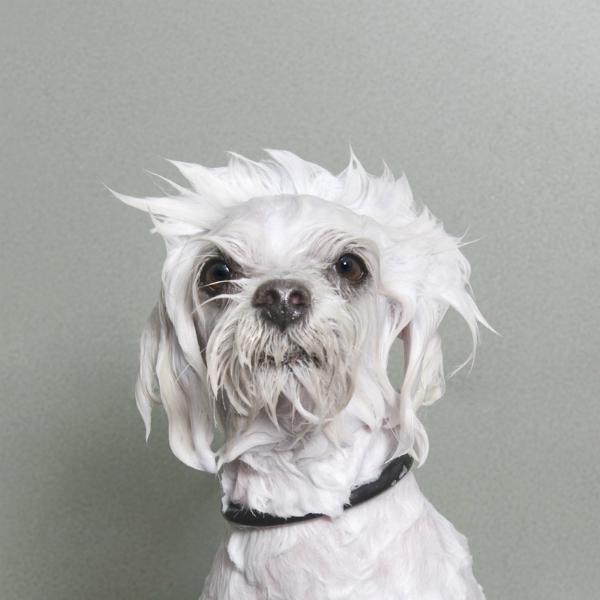 Wet dog 7-GOED