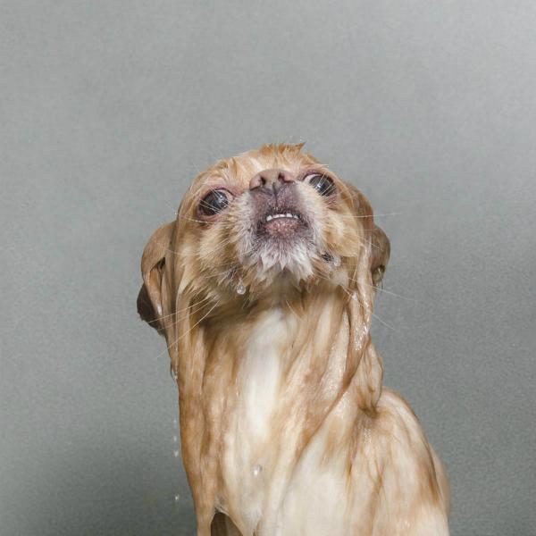 Wet dog 8-GOED