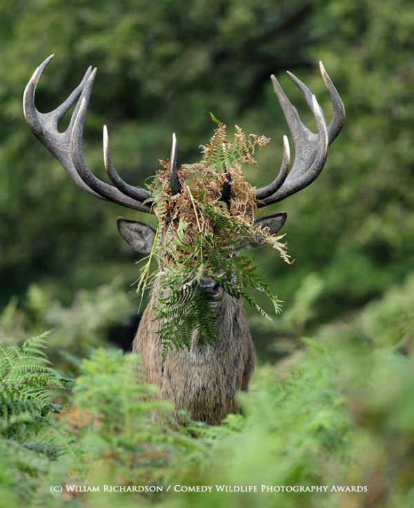 The Comedy Wildlife Photography Awards 2