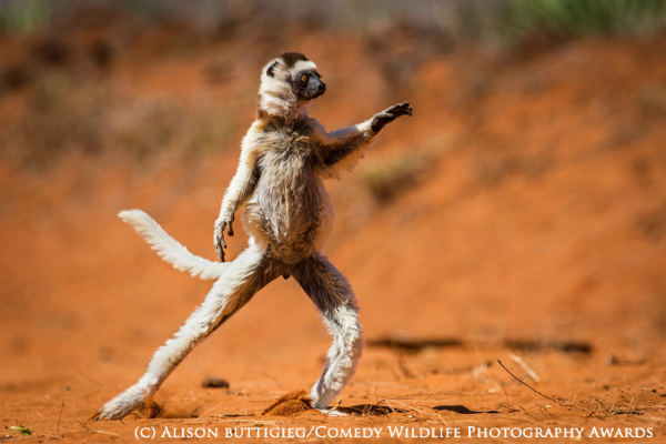 The Comedy Wildlife Photography Awards 4