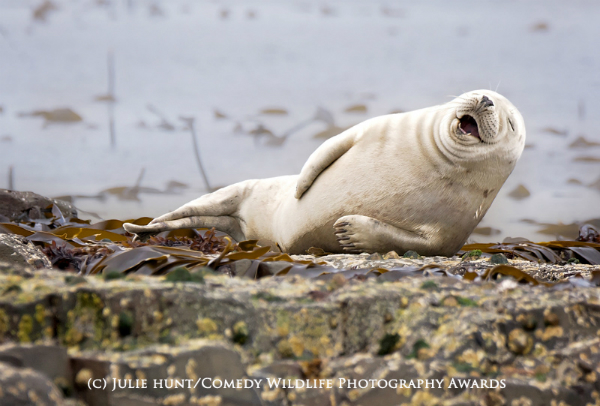 The Comedy Wildlife Photography Awards 5