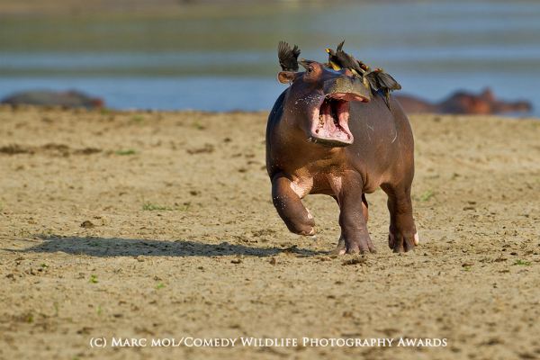 The Comedy Wildlife Photography Awards 6