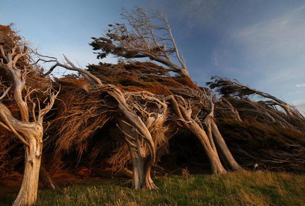 Slope Point, Nieuw-Zeeland 2