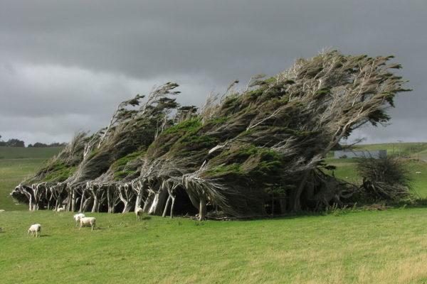 Slope Point, Nieuw-Zeeland