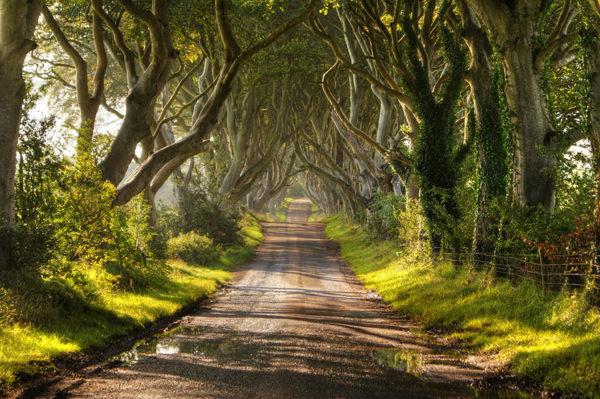 The Dark Hedges, Ierland 2