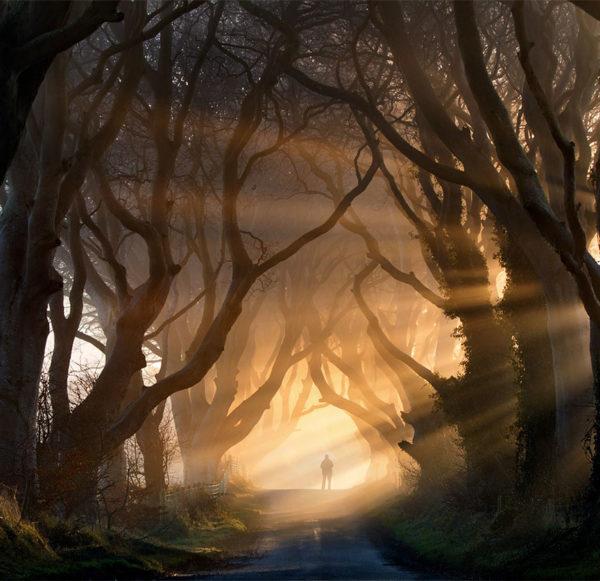 The Dark Hedges, Ierland