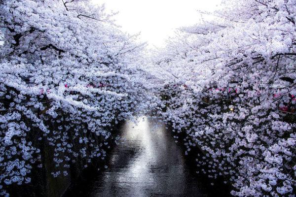 Lente in Japan bloesem 2