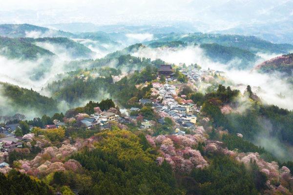 Lente in Japan bloesem 3