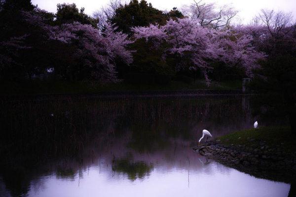 Lente in Japan bloesem 4