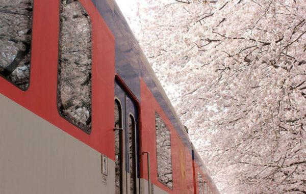 Lente in Japan bloesem 5