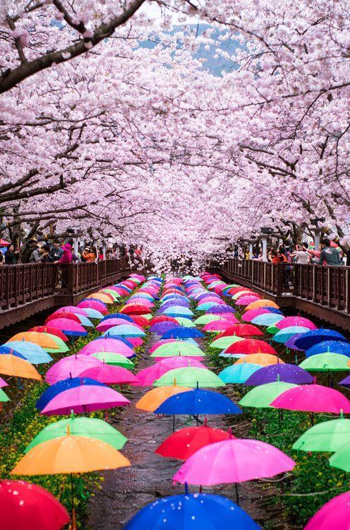 Lente in Japan bloesem 6