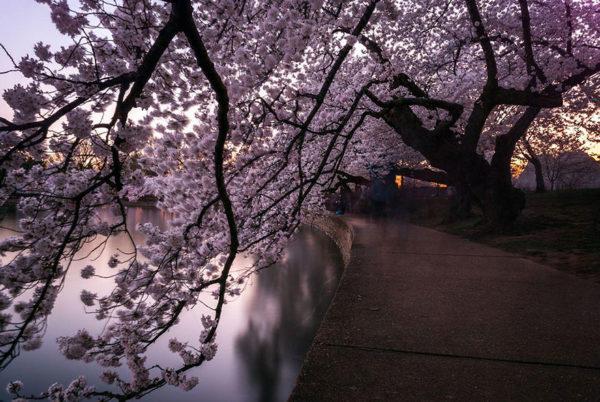 Lente in Japan bloesem 9