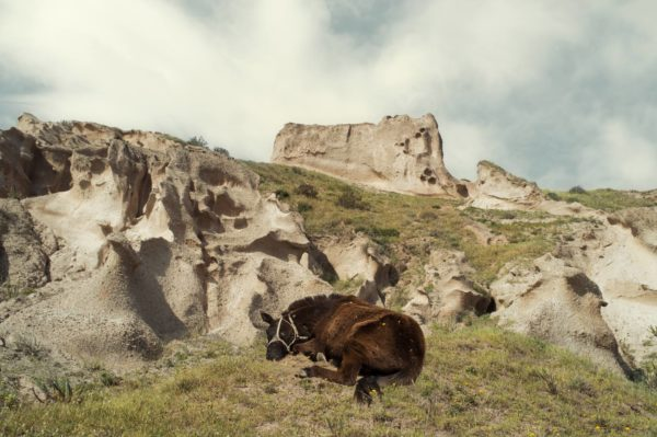 Petros Koublis natuur landschap